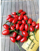 Devil's Rosehip (Chilli seeds)