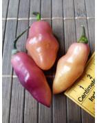 Pimenta Cheiro (Chilli semena)
